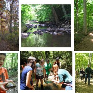 Hemlock Bluff Nature Programs and Classes